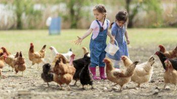 Минсельхозпрод РТ объявляет конкурсный отбор КФХ по программе развития семейных ферм